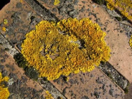 lichens,
