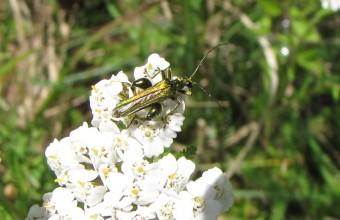 insectes, coléoptères,