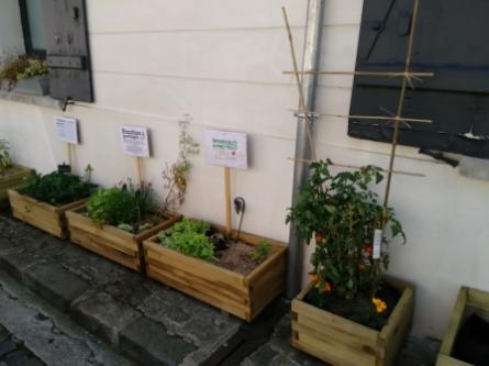 légumes,