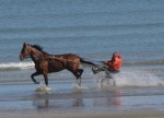 cabourg, chevaux, plage, mer,
