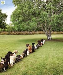 100423 chiens.JPG